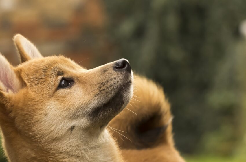 Dogecoin Turns into Most Talked about Crypto on Twitter Ever as Value Soars